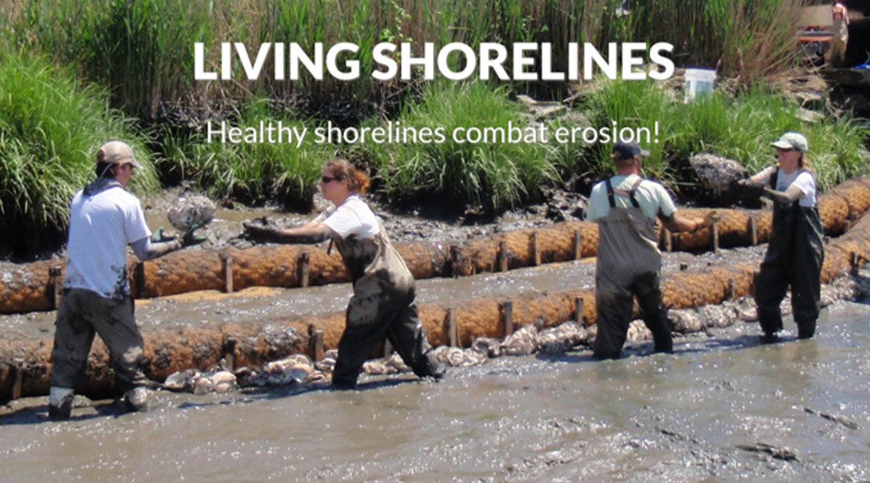 Living-Shorelines