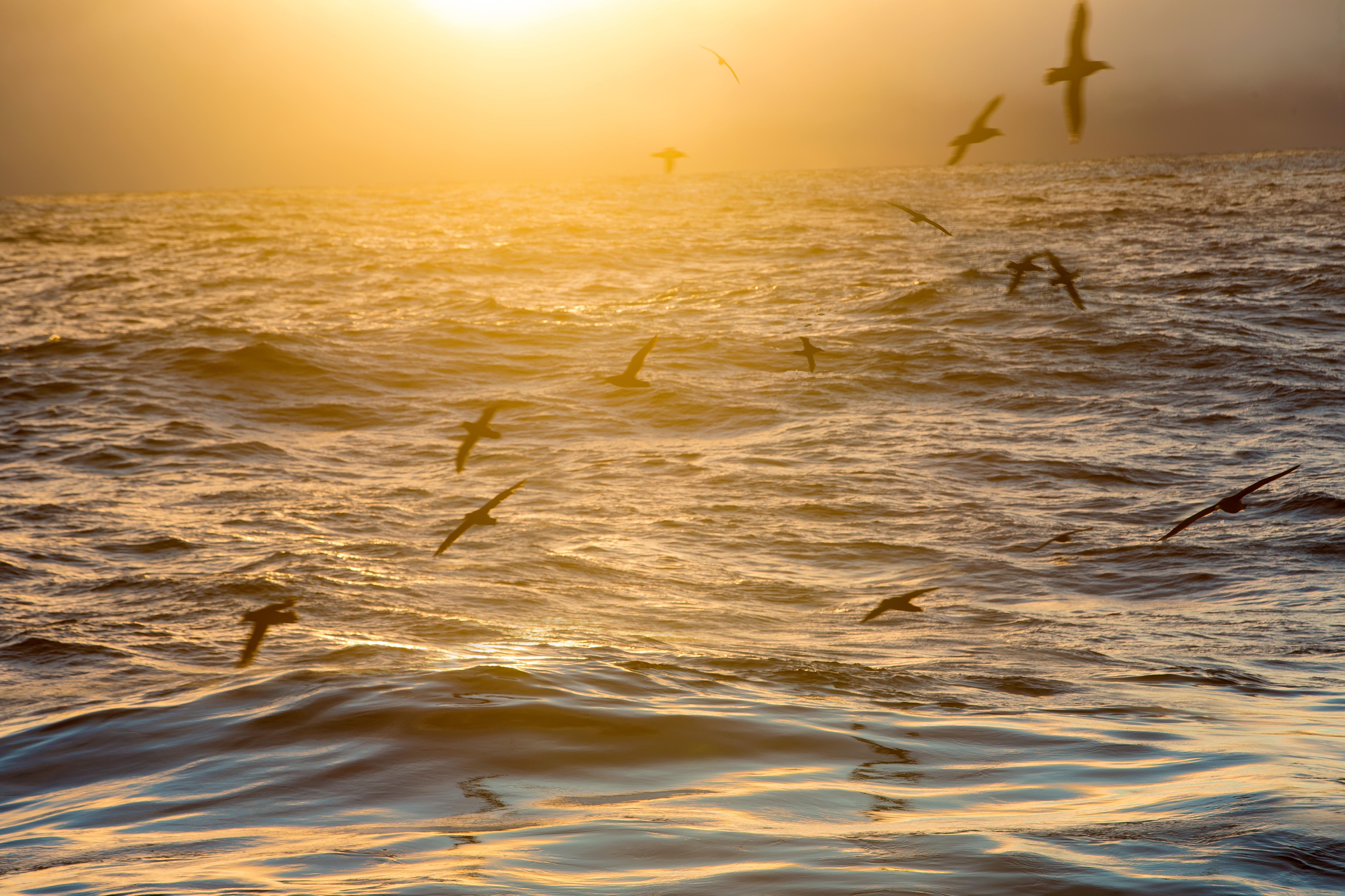 Birding_Sunrise petrels