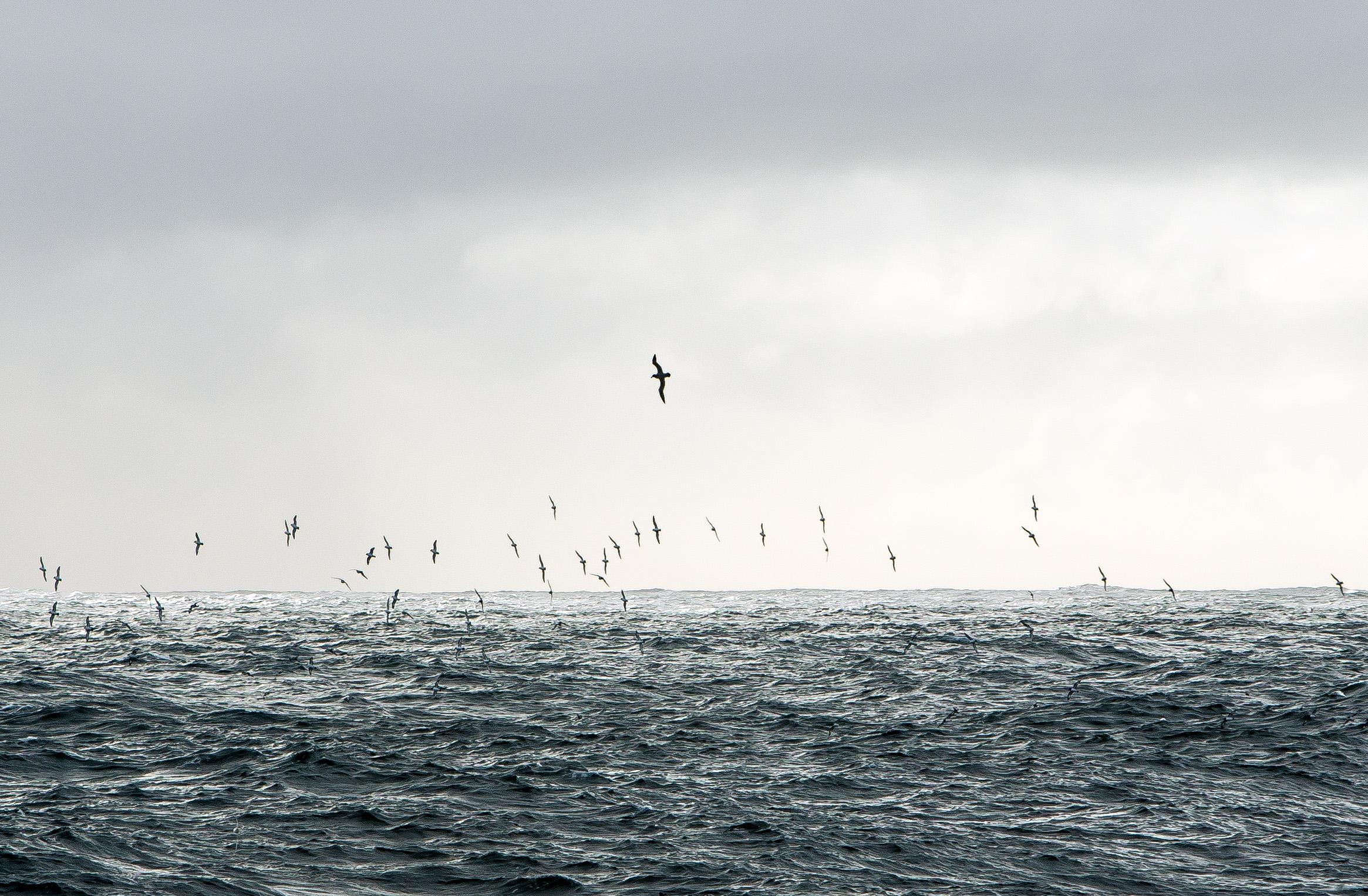 Birding_flock glide
