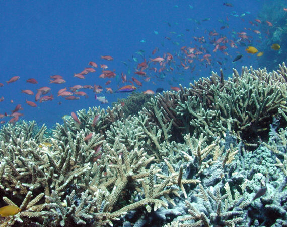 CoralKomodo
