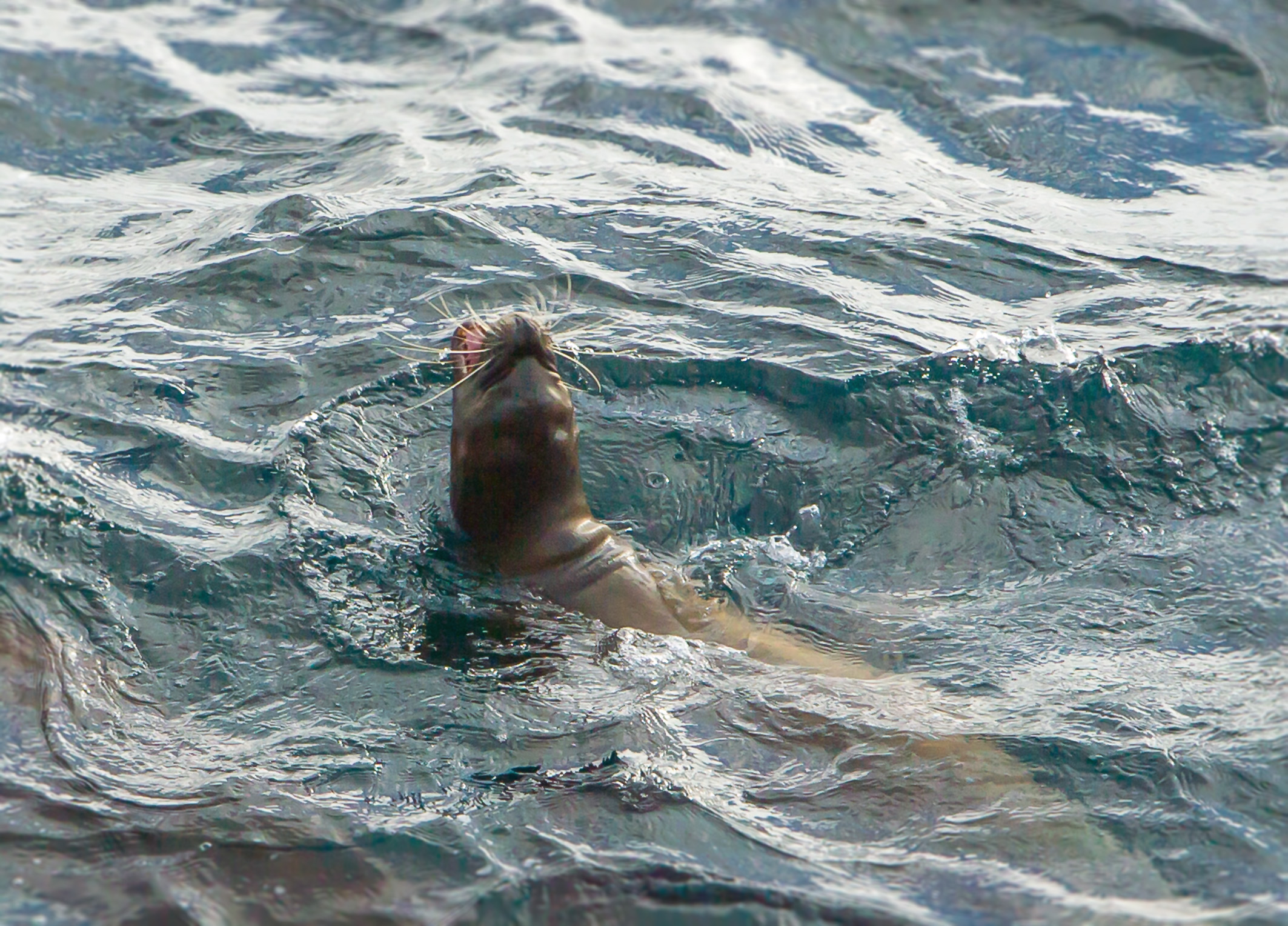 Seal_Roar