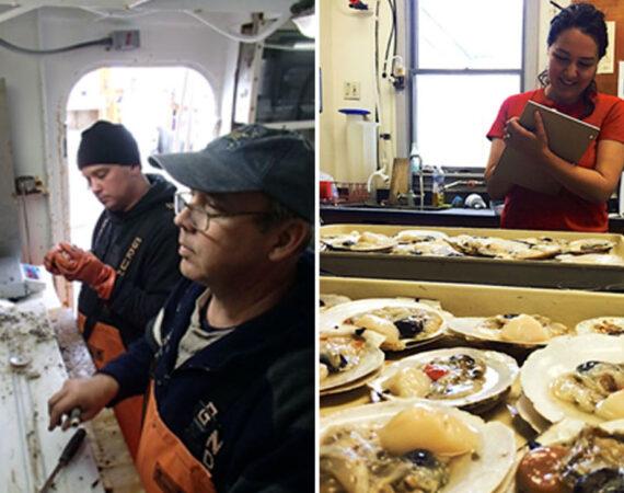 Investigating a Sea Scallop Pest
