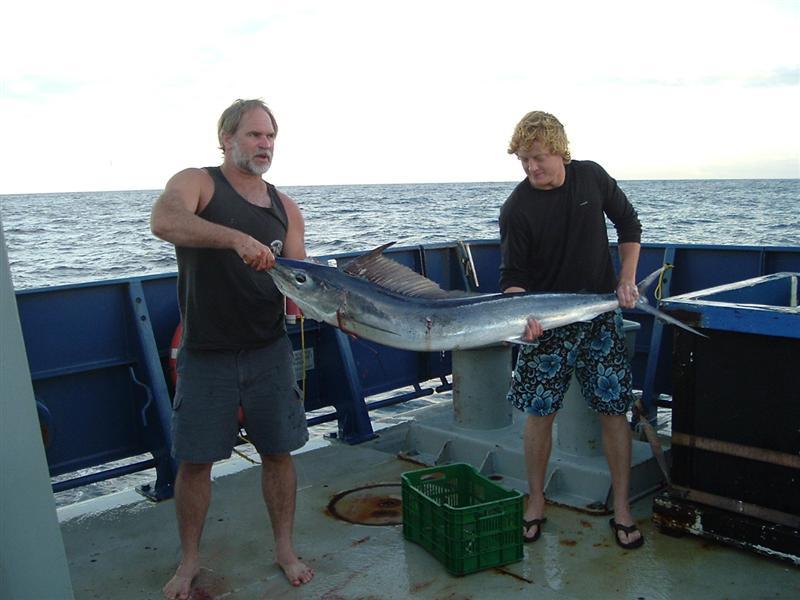 Нонсенс.  Рыба-меч в Балтике.